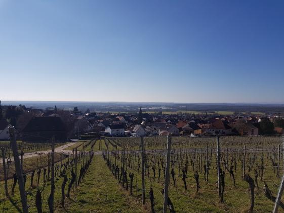 FDP Aschaffenburg-Land